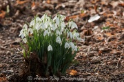 20150215_(Kingston Lacy)_13133