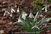 20150215_(Kingston Lacy)_13154