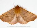 20141031_(Moth Macro)_11639