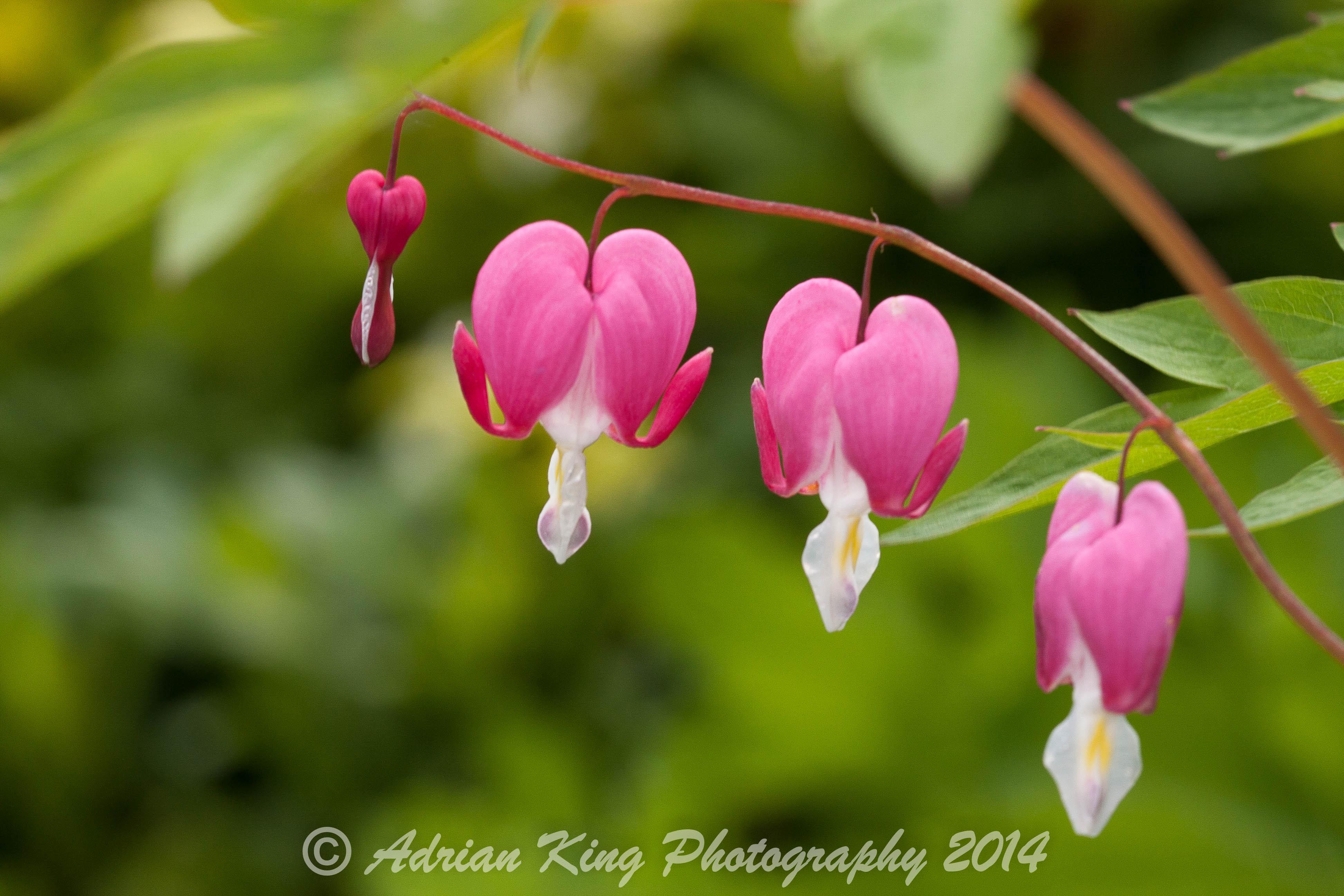 20140524_(Our Garden 2014)_1049