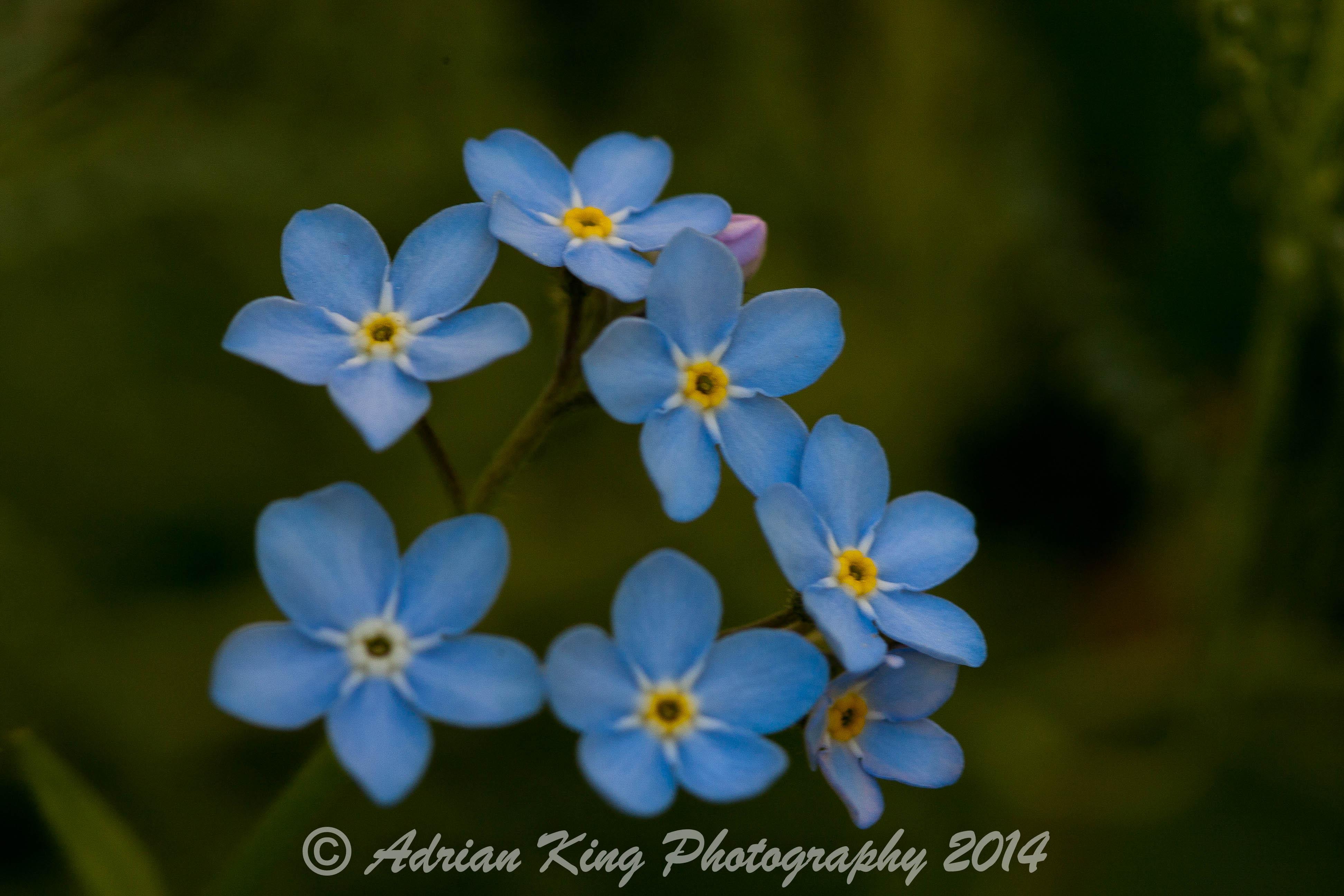 20140525_(Our Garden 2014)_1162