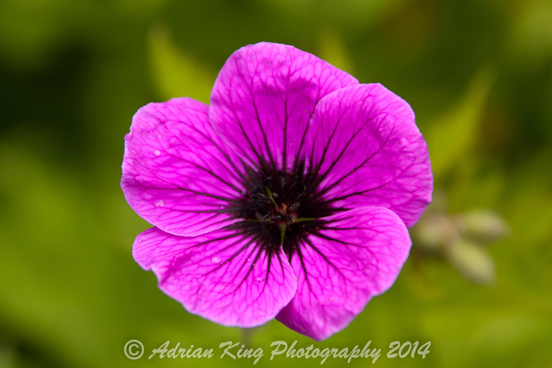 20140526_(Knoll Gardens)_1245