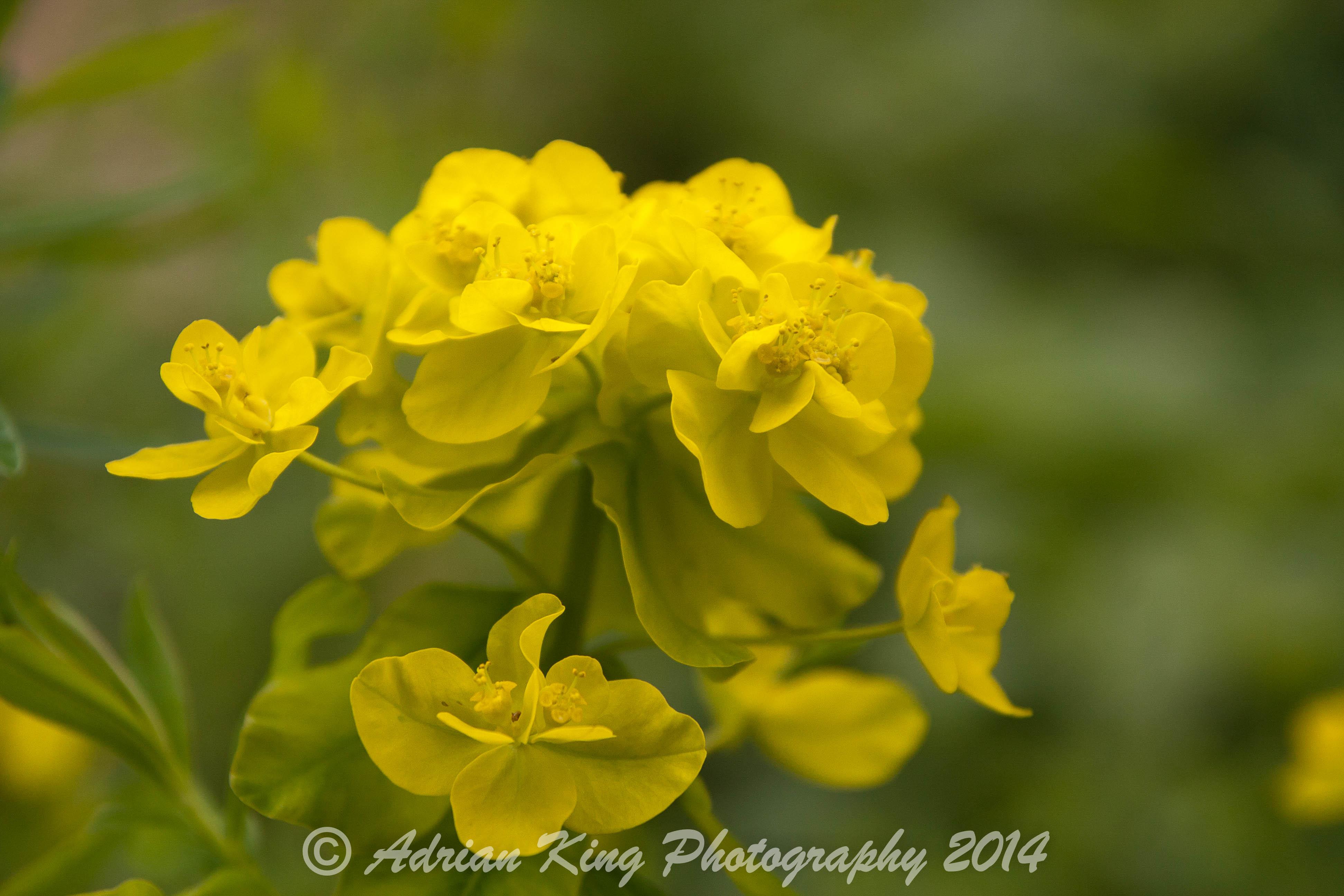 20140526_(Knoll Gardens)_1299