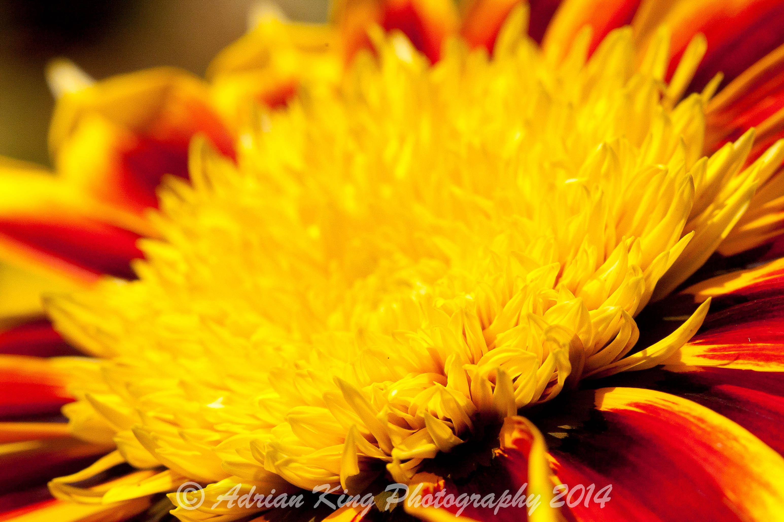 20140628_(Garden)_3040