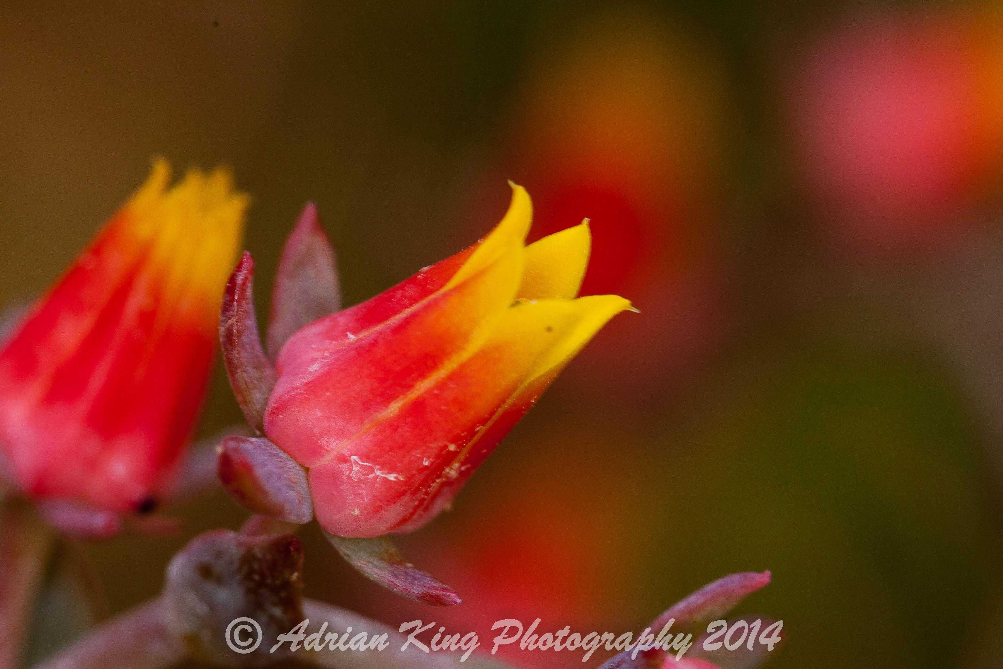 20140628_(Garden)_3046