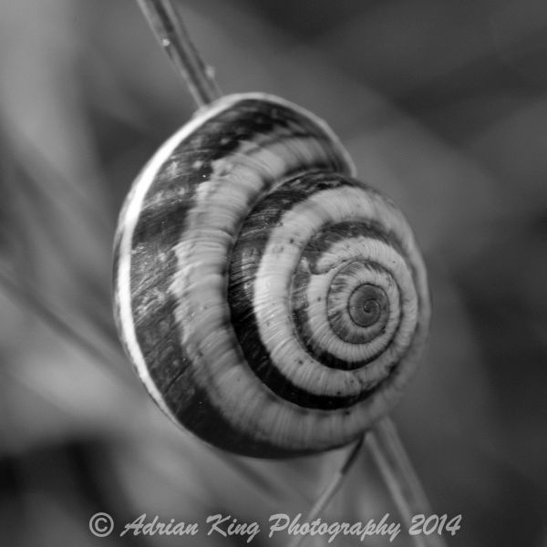 20140823_(Badbury Rings)_089-2